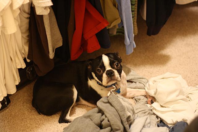 kosmo in the closet