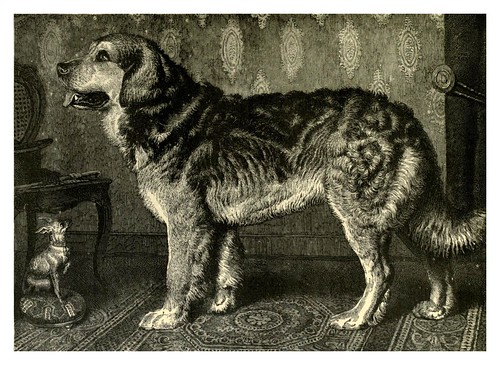 009-El perro Leonberg-The illustrated book of the dog 1881- Vero Kemball Shaw