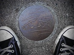 FOLLOW THE SALMON (Photocoyote) Tags: seattle usa fish salmon converse ballard washingtonstate allstar chucks chucktaylors salmonbay thepacificnorthwest theemeraldcity canonpowershota720is thelakewashingtonshipcanalfishladder