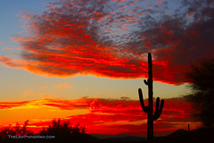 Arizona Sunset (Striking Photography by Bo Insogna) Tags: arizona cactus nature sunrise landscape photography gallery framedart scenic sunsets wallart galleries posters saguaro greetingcard stockimages naturephotography fineartprint canvasart mywinners canvasprint gicleeprint anawesomeshot strikingphotography customframed boinsogna thelightningmancom strikingphotographycom thelightningman jamesinsogna
