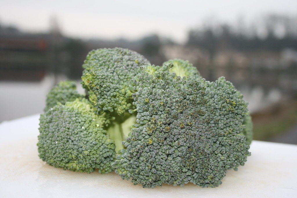Capay Farms Broccoli