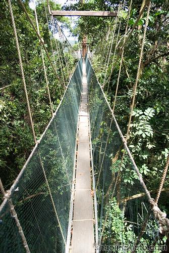 Poring Treetop Canopy Walkway