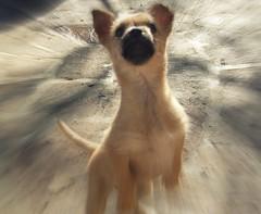 Looking up. (mao_lini) Tags: dog pet pets cane natura hund cachorro animali picnik