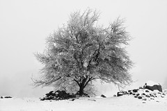 Winter tree bw (Jeanette Svensson) Tags: winter bw snow cold tree canon sweden d7 blacnandwhite h jeanettesvensson