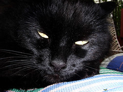 A annoyed Suki (jodispayne.....Mostly off :() Tags: pets black animals cat blackcat golden weird eyes feline fluffy suki blackcatspool animaleyespool jodispayne