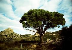 Jo ja hi era abans (almogaver) Tags: blue sky tree film analog 35mm lomo lca xpro crossprocess cel lomolca pi catalunya blau arbre almogaver procscreuat prixcolor vilajuga