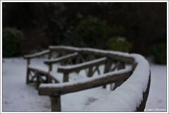 L'hiver au bois de St Cloud #3 | Winter in the Bois de St Cloud #3 (neoweb001 | www.julientordjman.fr) Tags: winter sky snow paris france tree grass canon dof bokeh hiver ciel neige arbre banc herbe pdc 2010 450d benchjulientordjman