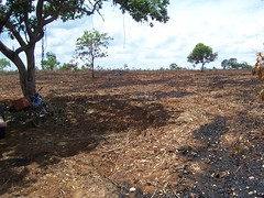 """GWD Forestry - Site Clearance (October) <a style=""""margin-left:10px; font-size:0.8em;"""" href=""""http://www.flickr.com/photos/47172958@N02/4328054008/"""" target=""""_blank"""">@flickr</a>"""