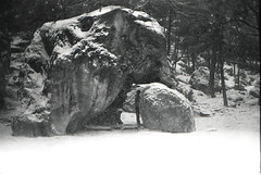 Fontainebleau (Lena in wonderland :D) Tags: camping schnee trees winter bw holiday snow elephant france cold nature rock analog forest canon frankreich rocks ae1 urlaub natur freezing climbing bouldering session kalt schwarz fontainebleau klettern klte weis bouldern crashpads ocn