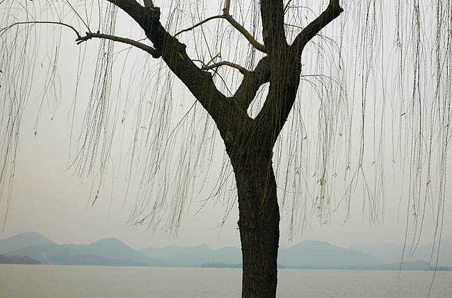 西湖樹03