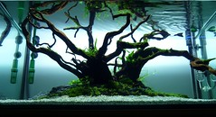 new project (Andy_Online) Tags: aquarium ada acquario aquaticplants aquascape oliverknott naturesoil
