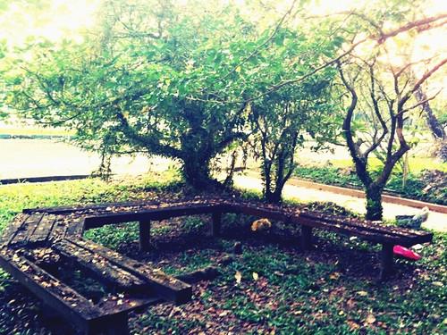 Di Bawah Pokok Yang Rendang.