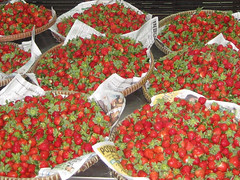 strawberries_bgo1