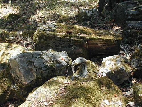 Mossy Petrified Wood