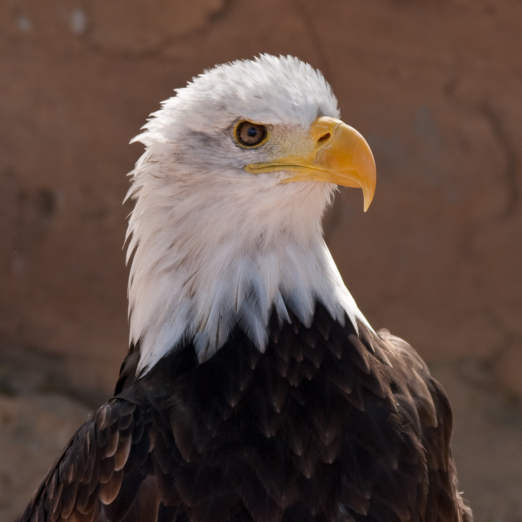 Eagle by Morten Holm, on Flickr