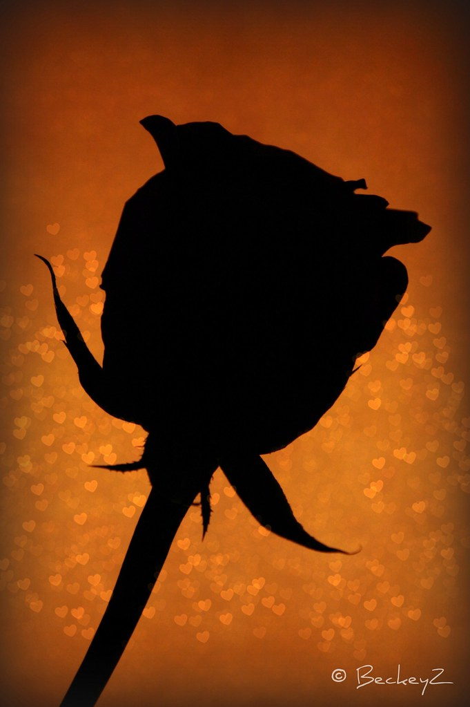 rose silhouette picnik edit