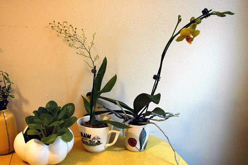 orchids at home 4b