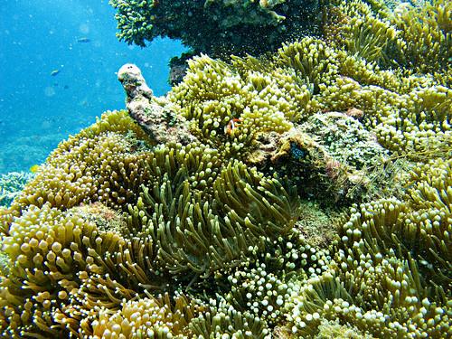 Flores Underwater 24