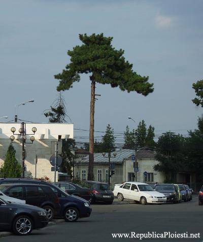 Copacul martor