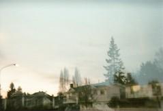 tree shadows (clanpia) Tags: holga135