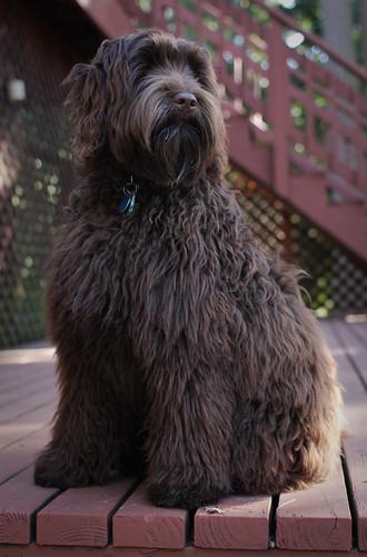Ewok on the deck