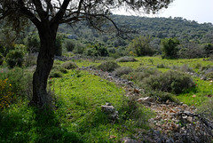 Carmel Forest, Israel (Mark Lukoyanichev) Tags: trees winter green forest israel spring carmel hellmaker