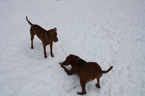 Snowy Playtime at Dog Park