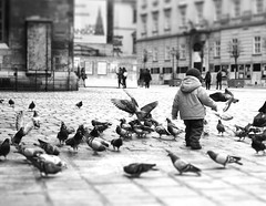Youth (Boscopix) Tags: vienna wien life winter white black birds austria europe child pigeons