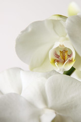 orchidee 2 (peulenbroek) Tags: toppers fotocursus pebru