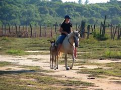 montando a pelo em boa companhia (Adriana Rbel) Tags: horses cavalos pferde horsebackriding reiten foal fohlen potrinho