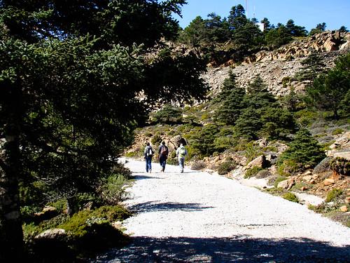 Camino de Los Realillos (4)