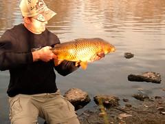 colorado carp2