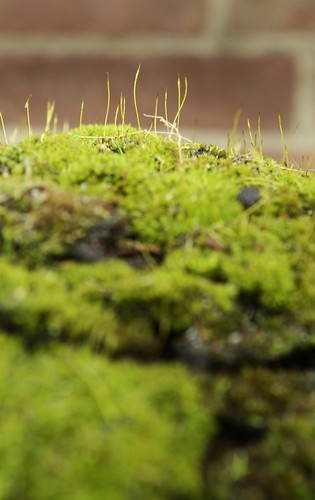 Moss in a planter
