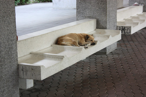 Dog finds a spot to sleep at the ferry stop