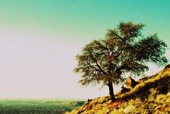life is beautiful (savannah.jane) Tags: life blue sky mountain tree film nature rock table nikon solitude view cross grain happiness idaho boise adventure process hillside springtime contentment d60