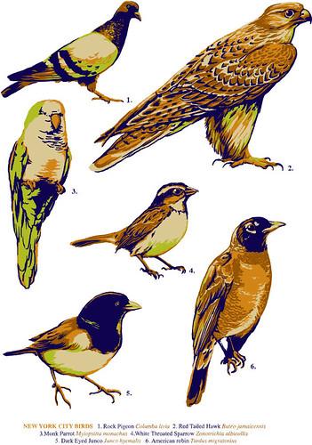 Neighbirds