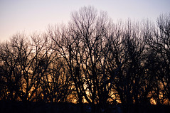 sunrise silouette (JPutsch) Tags: winter sunrise colorado silouette chatfield chatfieldstatepark