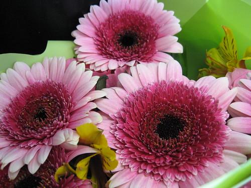 22Mar10 Pink