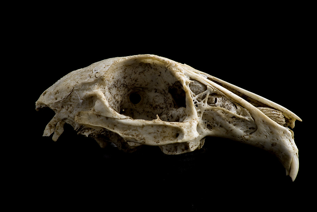 The World\'s Best Photos of naturalist and skeleton - Flickr Hive Mind