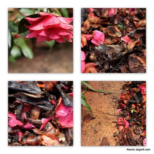 jardim de abril
