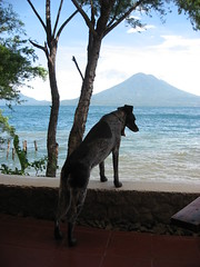Atitlan Lake Dog