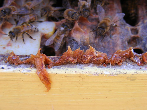 Propolis by OBA TTP, on Flickr