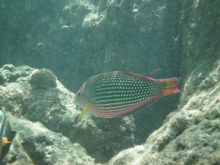 snorkeling8