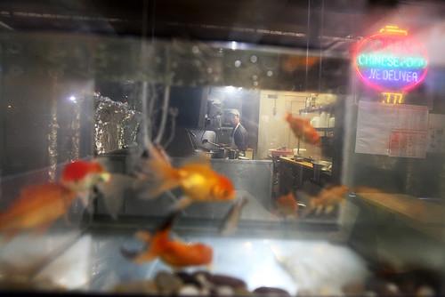 1000fish1