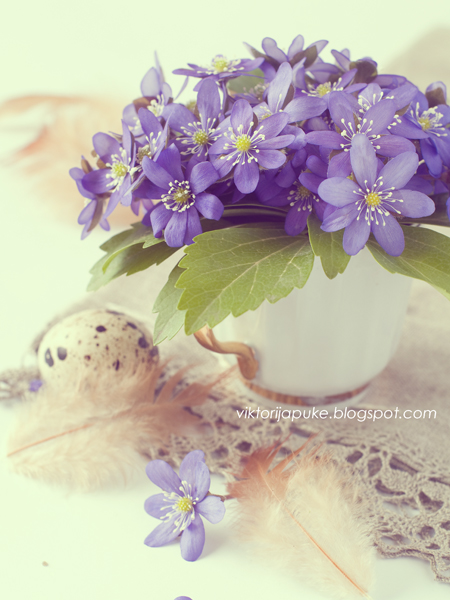 Blue wild flower