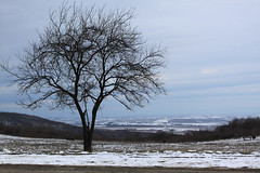 Together (Boris Stefanovic) Tags: winter nature canon serbia vrac vrsac