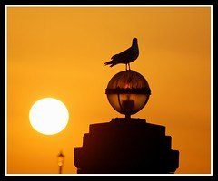 Looking to the sun.....(Explored.......Front Page!) (Levels Nature) Tags: uk light sunset england sun bird nature lamp ball gold golden gull north explore devon frontpage herring ilfracombe herringgull northdevon saariysqualitypictures