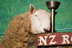 Il riposo del giusto (MadGrin) Tags: show newzealand animal rotorua sheep animale mammalian agrodome pecora sheepshow nuovazelanda mammifero geocity exif:iso_speed=800 exif:focal_length=300mm camera:make=nikoncorporation camera:model=nikond50 exif:make=nikoncorporation geostate geocountrys exif:model=nikond50 exif:lens=7003000mmf4056
