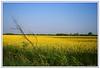 Petrolio giallo (Stefano Schwetz) Tags: londra circolofotograficopaullese