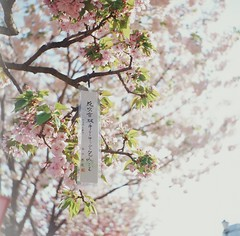 Love is In The Air (autumnkaki) Tags: travel sakura osaka e6 e100vs ilovejapan floweroflove silde withlove seagull4b  ilovetravel lutid 20100414